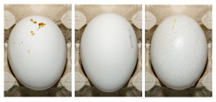 Figure 5. Examples of eggs with adhering material