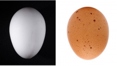 Figure 5. Clean, normal shaped white and brown eggs.