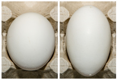 Figure 6. Examples of Grade B eggs for shape