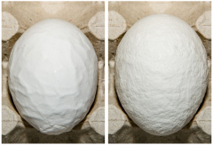 Figure 8. Grade B eggs because of extreme roughness of the shell.