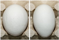 Figure 9. Examples of Grade B eggs because of shell ridges.